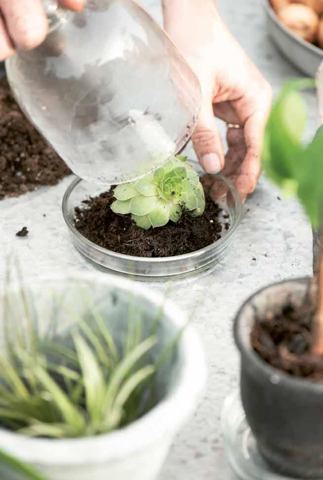 DIY Pflanzen eingraben
