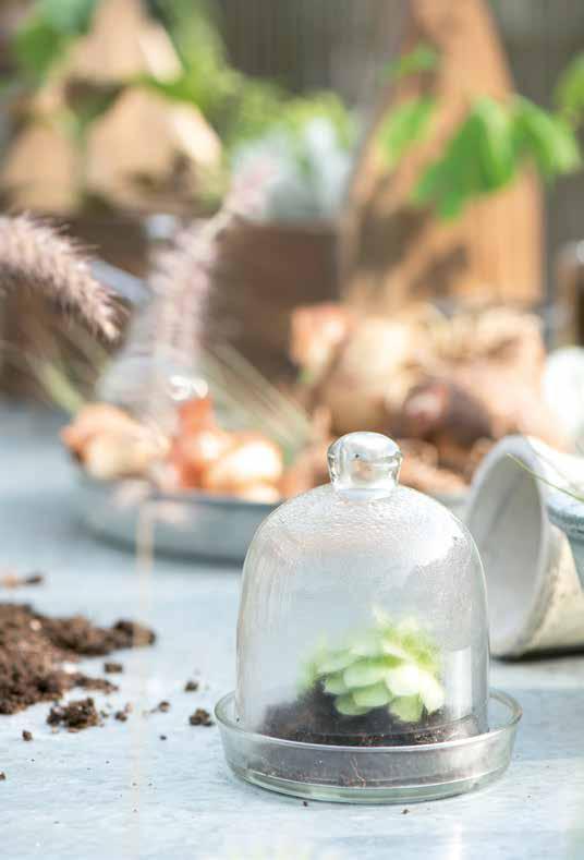 Pflanzenaufzucht unter Glas mit Ib Laursen