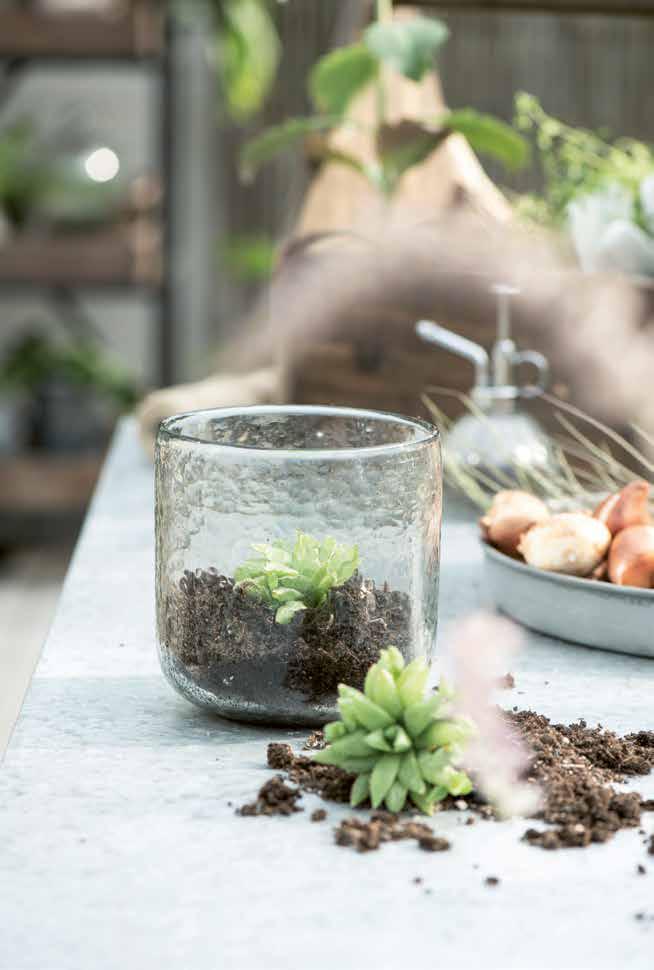 Blumenvasen aus Glas zur Erstbepflanzung