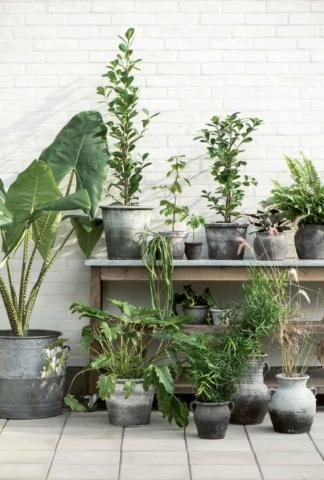 Alles für den Garten und Balkon