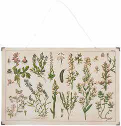 Kräuter und Pflanzenbild