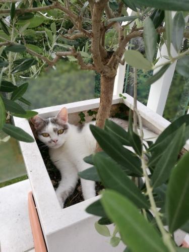 Wohnaccessoires, Dekoration, ChabiChic, Katze im Blumentopf
